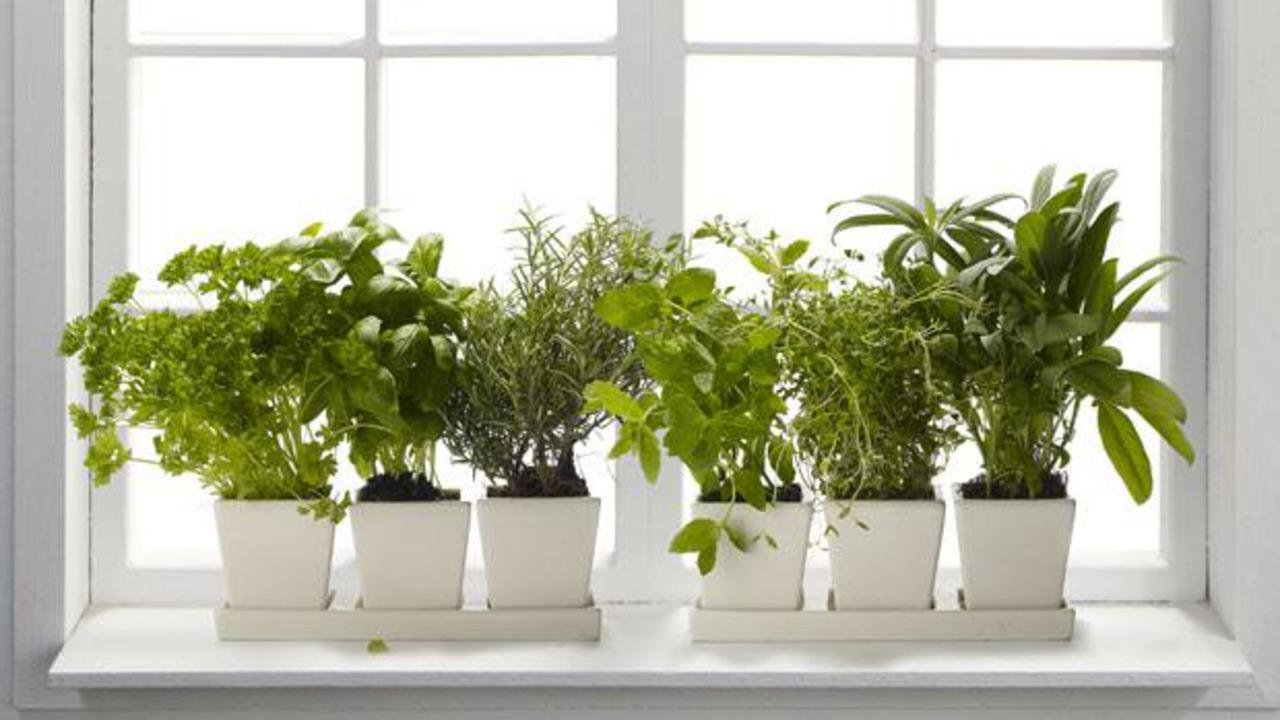 Полезные растения выращивание дома 28